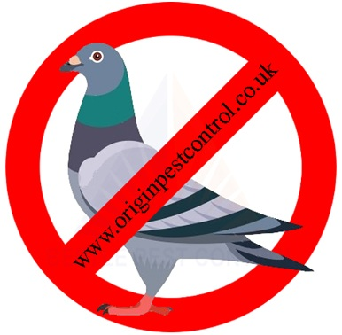 Bird Conrol Service