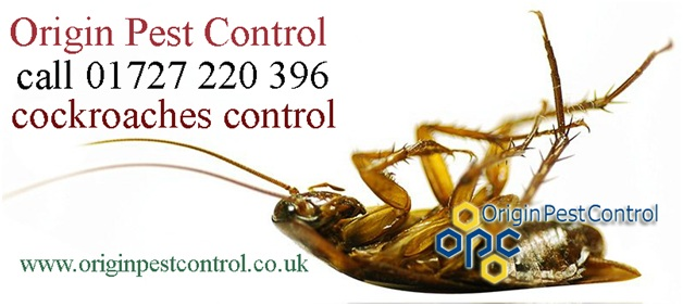 Cockroaches Pest Control Service