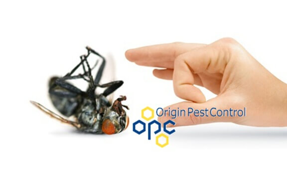 Fly Pest Service